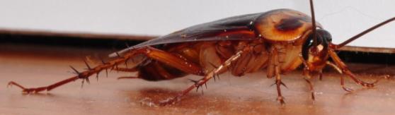 Eliminating Pests
